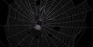Black Spider On Web   After Effects Project