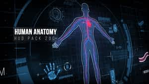 Human Anatomy Hud Elements  200 | After Effects Project