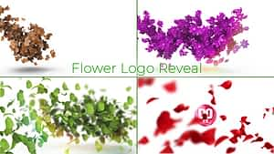 Flower Logo Reveal   After Effects Project